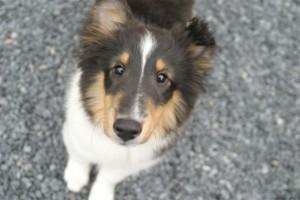 Jayda as a puppy