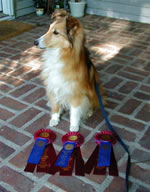 Sally - 3 1st place Q's in USDAA